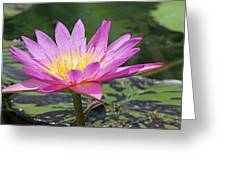 Water Lily On A Sunny Day Greeting Card
