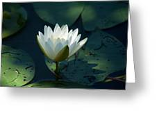 Water Lily Reaching Greeting Card