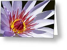 Water Lily Soaking Up The Sun Light Greeting Card