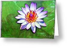 Water Lily Study Greeting Card