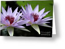 Water Lily Twins Greeting Card