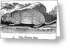 Water Rat Greeting Card
