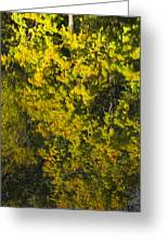 Water Reflection Abstract Autumn 1 F Greeting Card