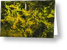 Water Reflection Abstract Autumn 1 G Greeting Card