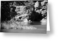 Water Rock Flower In Central Park Greeting Card