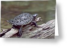 Water Turtle Greeting Card