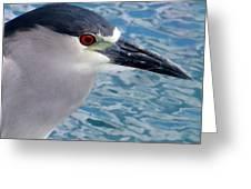Watercolored Black-crowned Night-heron Greeting Card