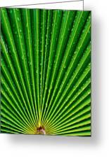 Waterdrops On Palm Leaf Greeting Card