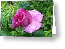 Watered Beauty Greeting Card
