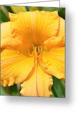 Watered Daylily  Greeting Card
