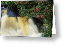 Waterfall And Fuschia, Ireland Greeting Card