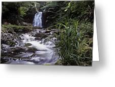 Waterfall In A Forest, Glenoe Greeting Card