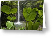 Waterfall In Lowland Tropical Rainforest Greeting Card