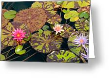 Waterlilies In A Garden Pool Greeting Card