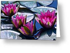 Waterlilies In Bright Sunlight Greeting Card