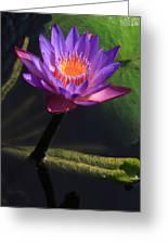 Waterlily 1 Greeting Card