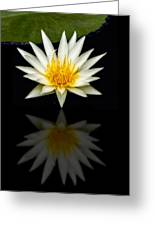 Waterlily And Reflection Greeting Card