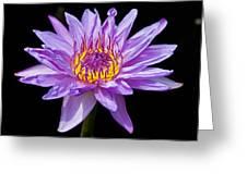 Waterlily Greeting Card