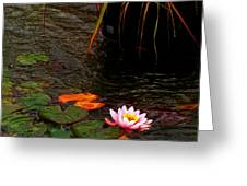 Waterlily In The Rain 2 Greeting Card