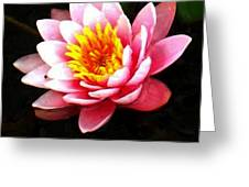 Waterlily On Pond Greeting Card