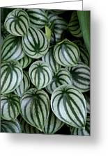 Watermelon Leaves 2 Greeting Card