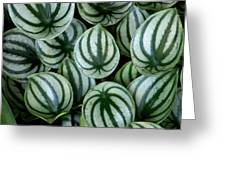 Watermelon Leaves Greeting Card