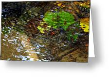 Watershed Creek Greeting Card