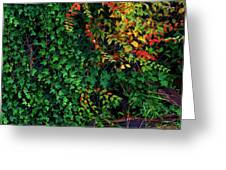 Watershed Park Foliage Greeting Card