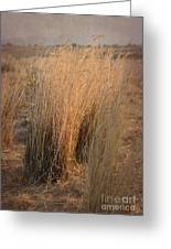 Waves Of Grass Greeting Card