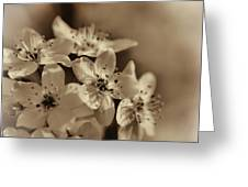 Waves Of Light In Sepia Greeting Card