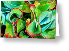Waves Vegetable 3 Greeting Card by Elena Mussi
