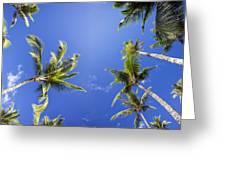 Waving Palm Trees Greeting Card