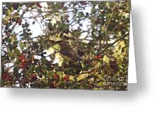 Wax Wing In A Berry Tree  Greeting Card
