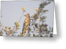 Wax Wing In Sunshine  Greeting Card