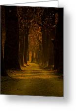 Way In The Forest Greeting Card