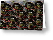 Way To Many Turtles Greeting Card