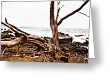 Weathered Beauty Greeting Card