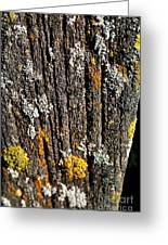 Weathered Post Greeting Card