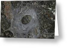 Web Of A Funnel-web Spider Greeting Card