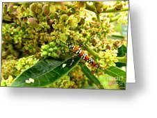 Webworm Moth Greeting Card
