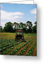 Weeding A Cabbage Field, Ireland Greeting Card