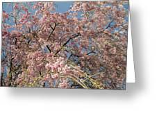 Weeping Cherry Tree In Bloom Greeting Card