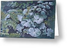 Weeping Ladies Mantle Greeting Card