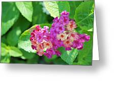 Weeping Lantana Greeting Card