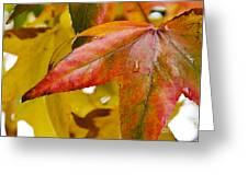 Weeping Red Leaf Greeting Card