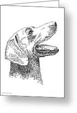 Weimaraner-drawing Greeting Card