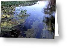 Wekiwa River Reflections Greeting Card