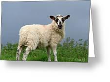 Wensleydale Lamb Greeting Card