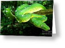 West Amazonian Emerald Tree Boa Greeting Card