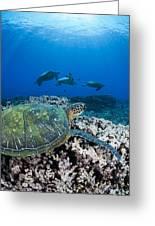 West Maui Sea Turtles Greeting Card
